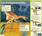 Les dromaeosauridés - Le Petit Quotidien, le seul site d'information quotidienne pour les 6 - 10 ans !