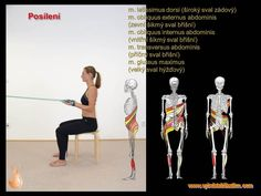 2 - Svalové řetězce Transversus Abdominis, Latissimus Dorsi, Pilates, Health Fitness, Relax, Baseball Cards, Sports, Physical Therapy, Abs