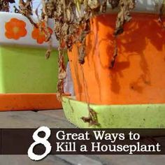 Most houseplants die within the first year you own them. Maybe this is why.