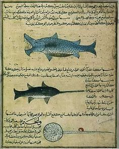 In biology, Al-Jāḥiẓ introduced the concept of food chains and also proposed a scheme of animal evolution that entailed natural selection, environmental determinism and possibly the inheritance of acquired characteristics. Medieval Life, Medieval Fantasy, Medieval Art, Bernard Lewis, Medieval Manuscript, Illuminated Manuscript, Science Art, Science And Nature, Image Of Fish