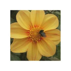 Bee on Yellow Dahlia Floral Wood Print - floral style flower flowers stylish diy personalize