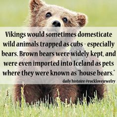 and when you thought Vikings couldnt get more badass..  -  Daily Histoire | Viking Bears More @Peter Thomas Doherty.com/rocklovefanpage