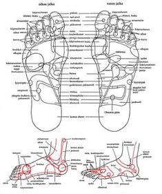 terapia Pressure Points, Health Fitness, Healing, Workout, Opi, Therapy, Dance Floors, Work Outs, Acupressure Points