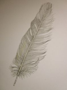 Cockatoo feather -- original pencil drawing