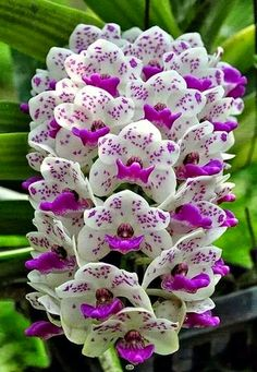 Beautiful Colorful Orchid