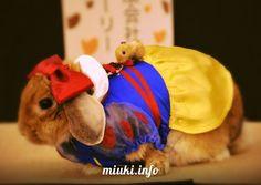 Кроличья #мода в Японии http://miuki.info/2011/01/krolichya-moda/