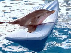 Clearwater Florida is the home to Winter, the dolphin from the movie Dolphin Tale