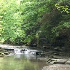 Stony Brook State Park, Dansville Picture: Gorge Trail - Check out TripAdvisor members' 180 candid photos and videos of Stony Brook State Park