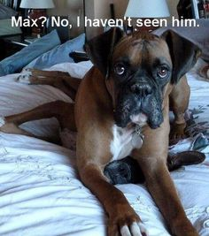 Max? No, I haven't seen him.