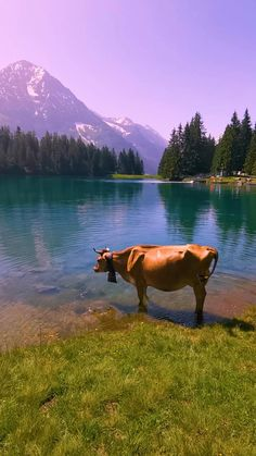 Green meadows, breathtaking mountains and the famous Swiss cows. Yes, this is a travel dream for everyone. If you want to see the most beautiful spots and get enjoy an unforgettable itinary do not hesitate to contact us. Beautiful Photos Of Nature, Beautiful Places To Travel, Nature Pictures, Amazing Nature, Cool Places To Visit, Beautiful Landscapes, Places In Switzerland, Alps Switzerland, Nature Photography