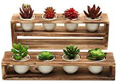 MyGift Rustic Burnt Wood Tiered Succulent Planter Stand with 8 Mini White Ceramic Plant Pots, Set of 2 Indoor plants Succulents garden Diy Wooden Planters, Rustic Planters, Garden Planters, Succulents Garden, Succulent Planter Diy, Diy Planter Box, Tiered Planter, Planter Pots, Ceramic Plant Pots