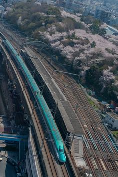 Bullet Train & Cherry Blossoms E5系と桜