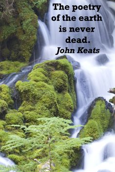"""The poetry of the earth is never dead."" John Keats -- On image of CLEARWATER FALLS in OREGON -- Explore tips and quotes on writing inspiration at http://www.examiner.com/article/writing-inspiration-from-water-and-nature-tips-and-quotes"