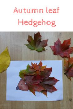 looking for the perfect autumn craft? How about this autumn leaf hedgehog. Autumn leaves and so colourful and this is the perfect autumn leaf craft Autumn Leaves Craft, Autumn Crafts, Autumn Art, Autumn Ideas, Hedgehog Craft, Crafts For Kids, Arts And Crafts, Leaf Crafts, Pre School