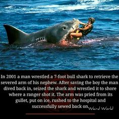 In 2001 a man wrestled a bull shark to retrieve the severed arm of his nephew. After saving the boy the man dived back in, seized the shark and wrestled it to share where a ranger shot it. The arm was pried from its gullet, put on ice. Ranger, Men's Wrestling, Dove Men, Wtf Fun Facts, Creepy Facts, Random Facts, Faith In Humanity Restored, Animal Facts, Animal Puns