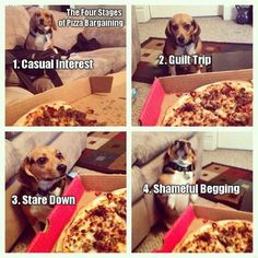 Funny Dogs - Four stages of pizza bargaining... (209 Pics)