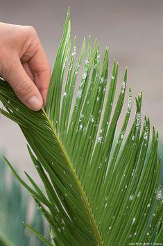 Soigner les plantes d'intérieur