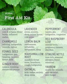 Healing Herbs, Medicinal Plants, Natural Healing, Holistic Healing, Natural Life, Natural Living, Natural Beauty, Herbal Magic, Herbal Cure