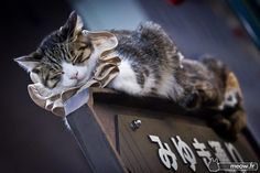 Photographer Jordy Meow - Cats of Japan