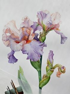 Iris watercolor illustration by Victoria Mezenova. Watercolor Sketch, Watercolor Illustration, Watercolor Flowers, Iris Drawing, Plant Drawing, Botanical Drawings, Botanical Art, Plant Illustration, Botanical Illustration