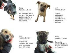 ACTIVITATI PRESCOLARI: Semne grafice prescolari Dogs, Hyena, Pet Dogs, Doggies
