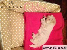 Chloé aproveitando sua caminha e mantinha MILLIE Combinações perfeitas para seu Pet: www.millie.com.br
