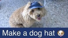 Make Dog Visor Hat-Cap-DIY Dog Food/Groom/Clothes - a tutorial by Cookin...