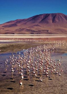 Laguna Colorada Bolivia, Wildlife Nature, Mountains, World, Beach, Water, Travel, Outdoor, Instagram