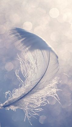 The feather flew, not because of anything in itself but because the air bore it along. Thus am I, a feather on the breath of God. ~Hildegard of Bingen Angels Among Us, All Nature, Nature Images, Foto Art, White Feathers, Blue Feather, Feather Touch, Feather Art, Jolie Photo