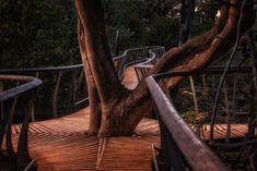 Chitabe's new walkways were designed to incorporate and enhance the beauty of the trees on the island Okavango Delta, Walkways, Camps, Lodges, Safari, Wildlife, Bucket, Trees, Island