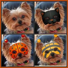 Zoe's Halloween costumes
