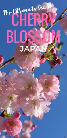 Where and when to see the Cherry Blossoms in Japan.  Follow the Cherry Blossom Front, find the Sakura and the best Hanami in Japan.  #Japan #CherryBlossom #Japanese