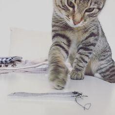 #throwbackthursday with little Lucky  #luckythecat #love #cute #catsofsalzburg #unterfoehring #germany #cat #meow #ilovemypet #catlovers #lovekittens #instapet #catsagram #kitten #kitty #catstagram #kittycat #catsofinstagram #ilovemycat #catlove #catoftheday #furry #cats_of_instagram #cats #catlife #katze #katzenliebe #miezekatze
