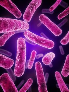 Bacteria to survive on a variety of energy sources. Nonetheless, scientists were surprised recently to discover new species of bacteria that can survive and function on electricity alone.