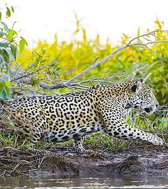 The Pantanal, Brazil – Natural Beauty in South America