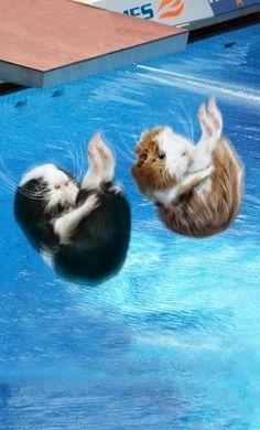 "Porquinhos * * "" Don'ts ferget to hold yer breath till ya surface ! """