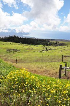 Kohala Mountain Road, Big Island, Hawaii (gorgeous!!!)