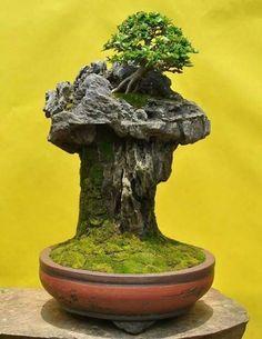 Bonsai Tree Care, Bonsai Art, Bonsai Plants, Bonsai Garden, Bonsai Trees, Mini Bonsai, Cement Garden, Moss Garden, Fish Tank Terrarium