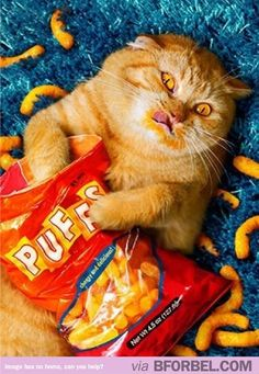 Beautiful Cats Pictures, Cute Kittens, Funny Cats and Kittens and More . Funny Animal Pictures, Funny Animals, Cute Animals, Crazy Cat Lady, Crazy Cats, Catsu The Cat, Funny Cute, Hilarious, Mom Jokes