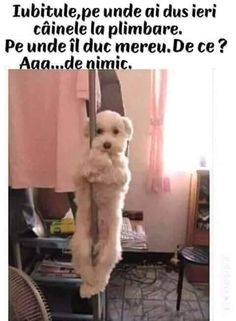 Very interesting post: TOP 40 Funny Dogs and Puppies Pictures. Also dompiсt.сom lot of interesting things on Funny Dog. Dog Quotes Funny, Dog Memes, Funny Dogs, Funny Animals, Funny Puppy Pictures, Cute Posts, Humor Grafico, Mans Best Friend, Popular Memes