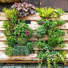 How to Hide an Air Conditioner: 9 Clever Ways 9 Ways to Disguise Your Outdoor AC Unit — The Family H Hide Ac Units, Mini Shed, Clean Air Conditioner, Iron Trellis, Tall Shrubs, Log Planter, Building A Patio, Privacy Screen Outdoor, Outdoor Tools