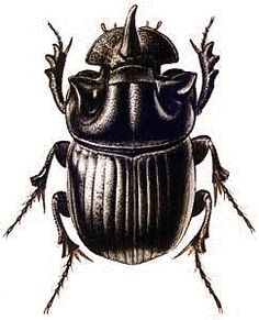 dung beetle tattoo - Google Search