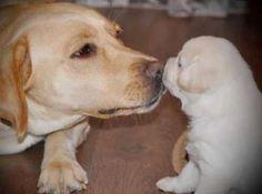 small kiss