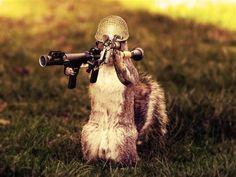 Esquilo Soldado.