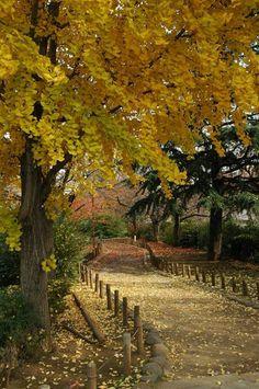 Autumn, Nerima, Japan