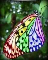 Rainbow Butterfly by MarchBreeze