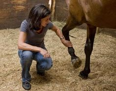 Learning Theory Training Tools for Positive Horse Behavior with Emily Weiss, PhD, CAAB | Practical Horseman