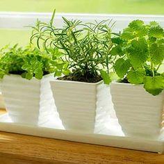 Enjoy fresh herbs long after the arrival of Jack Frost with a simple windowsill garden. #wintergarden #herbgarden