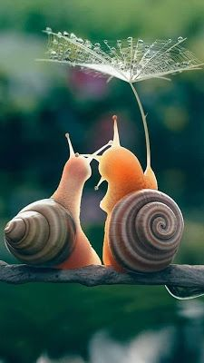 Cute little snails under an umbrella Vedi,già c'è il sole. nature and animals Funny And Cute Pug Videos Compilation 2016 – Funny Dog Videos 2016 🌷Chelle🌷 Beauty in the Nature Cute Creatures, Beautiful Creatures, Animals Beautiful, Cute Funny Animals, Cute Baby Animals, Nature Animals, Animals And Pets, Happy Animals, Good Morning Happy Saturday