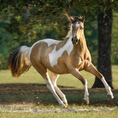 <b>Paint</b> <b>Horses</b> on Pinterest | <b>Paint</b> <b>Horses</b>, American <b>Paint</b> <b>Horse</b> and ...